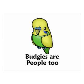 Budgies es gente también tarjetas postales