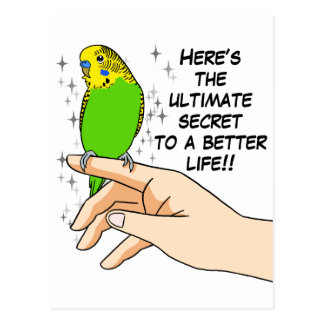 Budgies make life better postcard