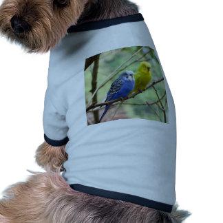 Budgies maravilloso ropa perro