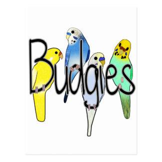 Budgies Postcard