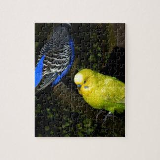 Budgies precioso puzzles con fotos