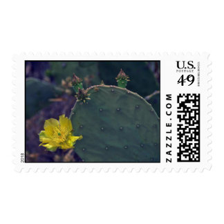 Buds And Flowers Of Cactus Stamp