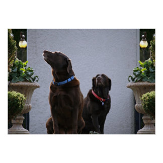"""Buds"", Chocolate Labs Poster"