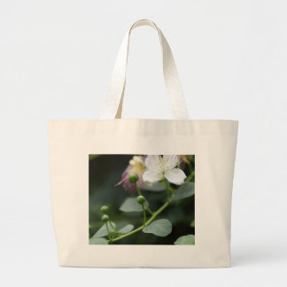 Buds of the caper bush, Capparis spinos. Large Tote Bag