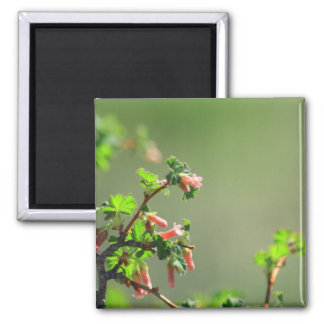Buds on a Colorado Tree 2 Inch Square Magnet