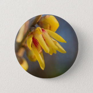 buds on the branches in spring pinback button