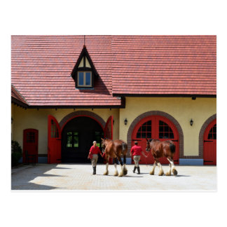 Budweiser Clydesdale Horses in New Hampshire Postcard