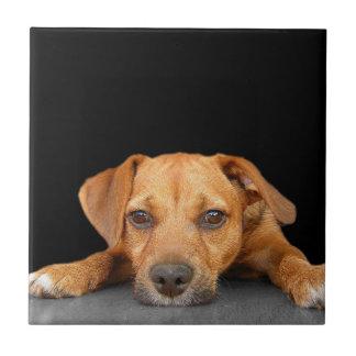 Buen perro azulejo cuadrado pequeño