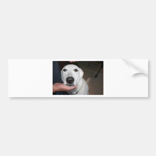 Buen perro pegatina para auto