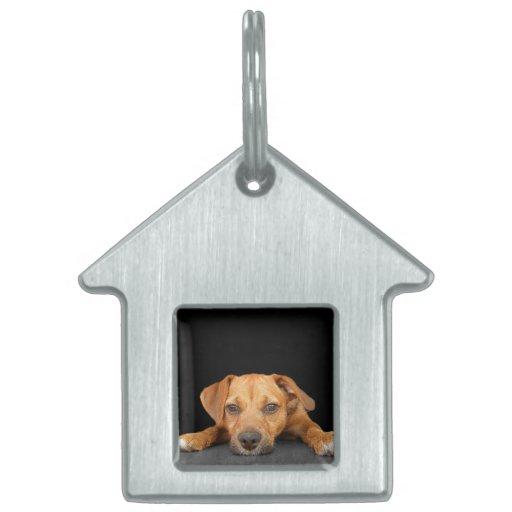 Buen perro placas mascota