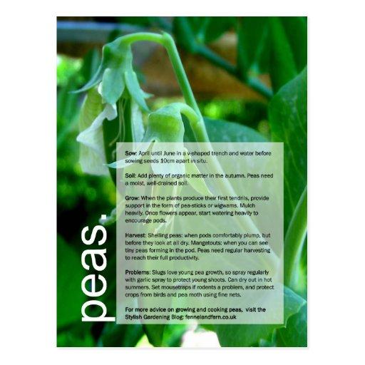 Buena guía cada vez mayor: Guisantes y maíz dulce Tarjetas Postales