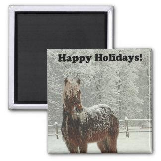 Buenas fiestas foto islandesa del caballo imán cuadrado
