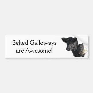 Buey ceñido hermoso de Galloway Pegatina De Parachoque
