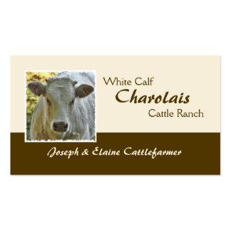 Buey o novilla de la carne de vaca de Charolais Tarjetas De Visita