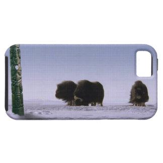 Bueyes de almizcle árticos y arte bovino de la fau iPhone 5 carcasa