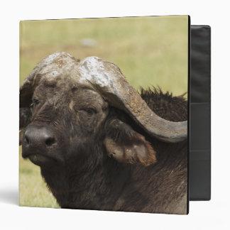 """Búfalo africano, caffer de Syncerus, colocándose a Carpeta 1 1/2"""""""