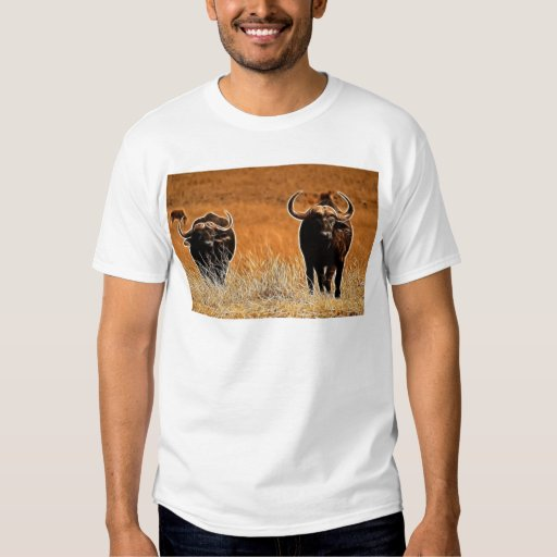 Búfalo africano playera