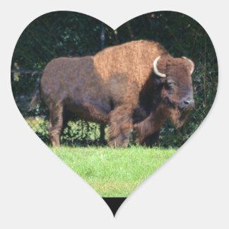 Búfalo (bisonte) Kansas, Oklahoma, Wyoming Pegatina En Forma De Corazón