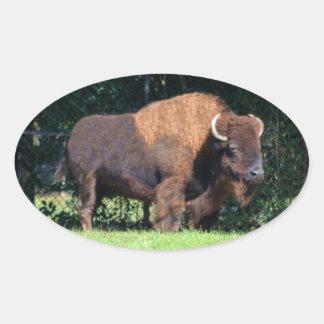 Búfalo (bisonte) Kansas, Oklahoma, Wyoming Pegatina Ovalada