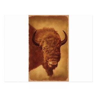 Búfalo bisonte postales