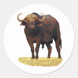 Búfalo de agua africano etiquetas redondas