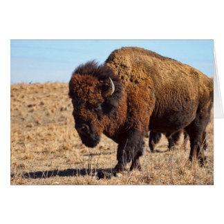 Búfalo de Kansas Tarjeta Pequeña