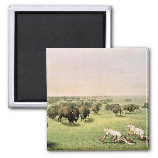 Búfalo de la caza camuflado imán cuadrado