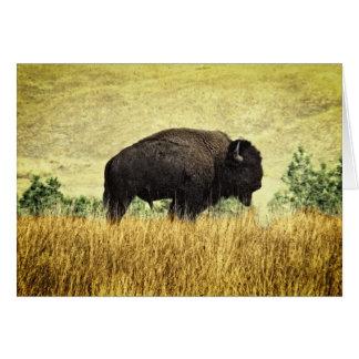Búfalo de Montana Tarjeta Pequeña
