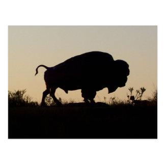 Búfalo de Oklahoma Postales