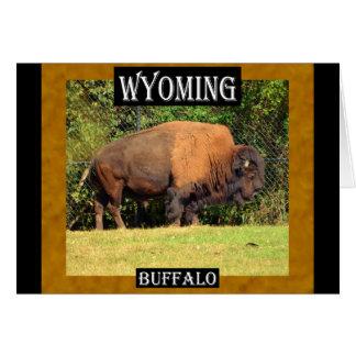 Búfalo de Wyoming (Kansas, Oklahoma, Wyoming) Tarjeta De Felicitación