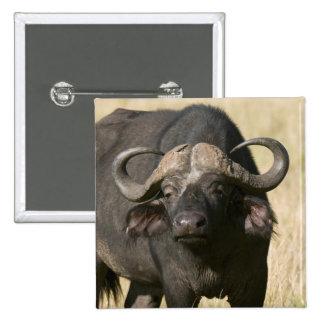 Búfalo del cabo (caffer) de Syncerus, Masai Mara Pin Cuadrado