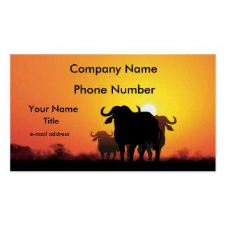 Búfalo del cabo tarjetas de visita