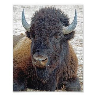 Búfalo distante 8x10 del soñador impresiones fotograficas