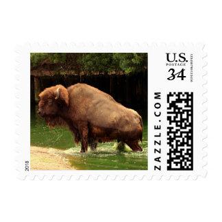 Búfalo en la charca (Kansas, Oklahoma y Wyoming) Estampillas