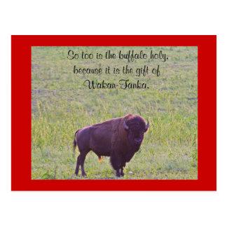 Búfalo en las tierras de Lakota Tarjetas Postales