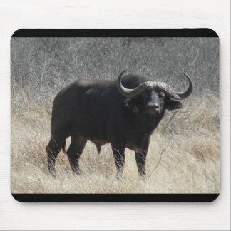 Búfalo en Suráfrica Alfombrillas De Ratón