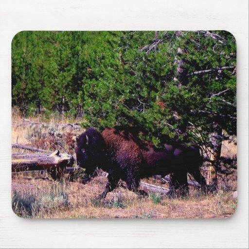 Búfalo en Yellowstone Alfombrillas De Ratón