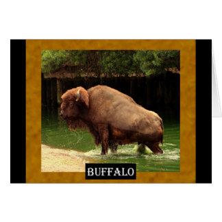 Búfalo (Kansas, Oklahoma, Wyoming) Tarjeta De Felicitación