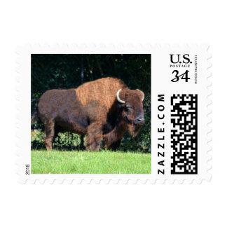 Búfalo (Kansas, Oklahoma y Wyoming) Sello Postal