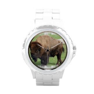 Búfalo norteamericano reloj