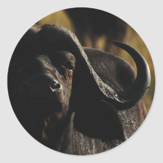 Búfalo - pegatinas animales grandes del safari etiquetas redondas