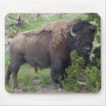 Búfalo que pega hacia fuera la lengua alfombrillas de raton