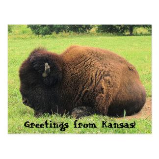 ¡búfalo, saludos de Kansas! Postal