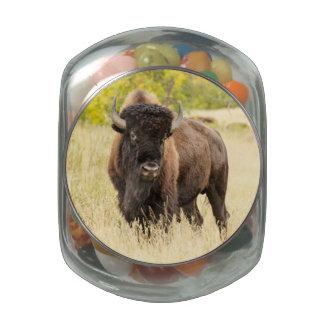 Búfalo salvaje en un campo jarras de cristal