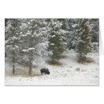 Búfalo solitario en Yellowstone Tarjeta De Felicitación