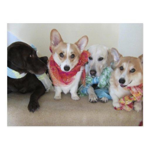 Bufandas del recién hecho en perritos postales