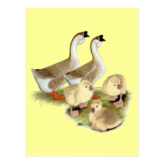 Buff African Goose Family Postcard