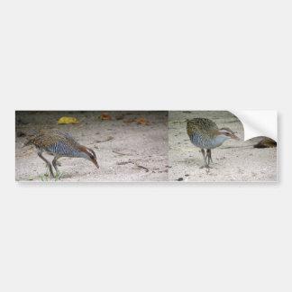 Buff-banded Rail (Gallirallus philippensis) Bumper Sticker