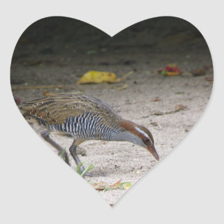 Buff-banded Rail, Gallirallus philippensis Heart Sticker