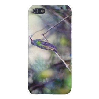 Buff Bellied Hummingbird Cover For iPhone SE/5/5s